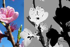 Mille et une façon de détourer une image avec GIMP