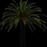 palmier prêt pour insérer un élément détouré
