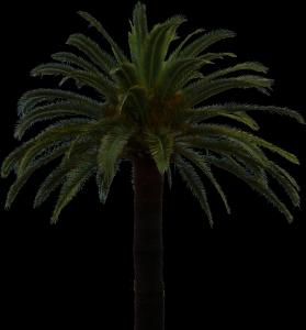 Palmier parfaitement détouré